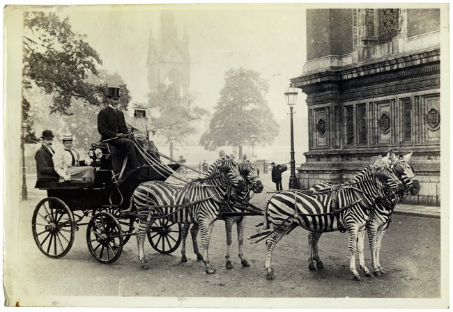 zebra-carriage