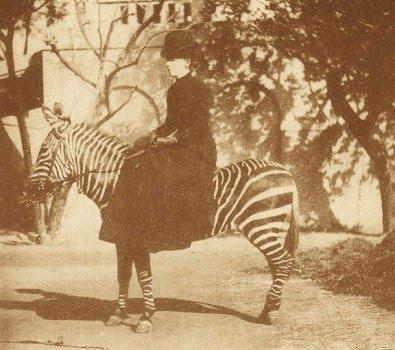 zebra20ss1